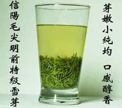信阳茶叶网