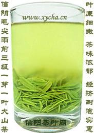 信阳毛尖雨前三级芽叶茶汤图片
