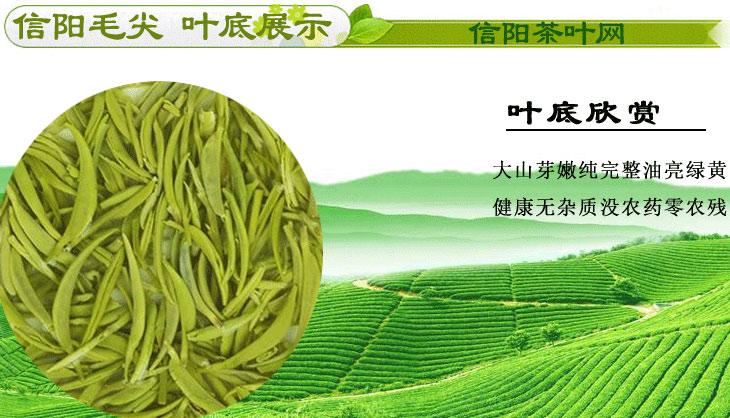 新茶信阳毛尖雨前茶特级珍芽茶汤图片